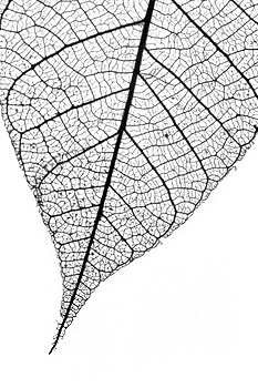 Fall Leaf No.2